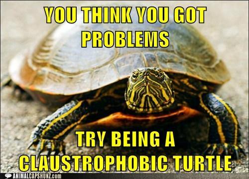 Turtle funny - photo#21