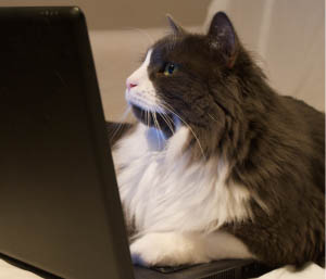 Cat on laptop - Just Browsing, cropped copy, photo by Wilson Afonso, Creative Commons Attribution 2.0 Generic license.