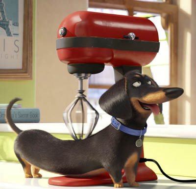 A dachshund enjoys a back massage from an electric mixer.
